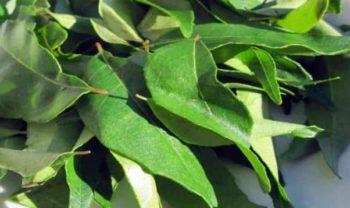 Usar hojas de curry como remedio casero para las canas
