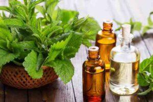Tratar la caída del cabello y crecimiento con aceite de menta