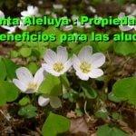 Planta medicinal: Aleluya (Oxalis acetosella)