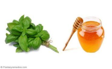 Como usar Hojas de albahaca y miel para el asma