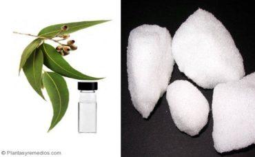 Curar el asma al Inhalar aceite de eucalipto y alcanfor