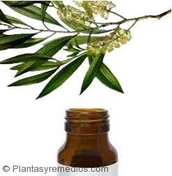 Aceite de árbol de te para quitar el acné de la cara