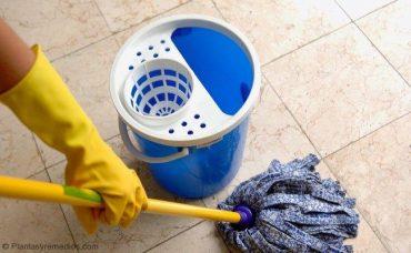Eliminar las pulgas con ácido cítrico