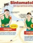 Diferencias entre la chikungunya y el dengue