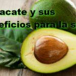 Aguacate (Persea americana) y sus beneficios para la salud