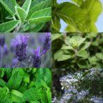 Plantas medicinales y remedios de España