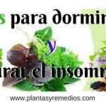 Hierbas medicinales para dormir mejor