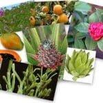 Plantas adelgazantes efectivas