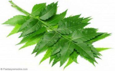 Usar neem para evitar la perdida de cabello