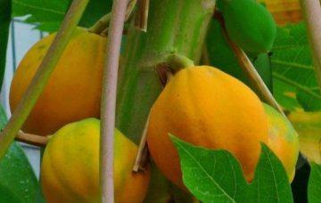Frutas rico en betacaroteno para subir las defensas
