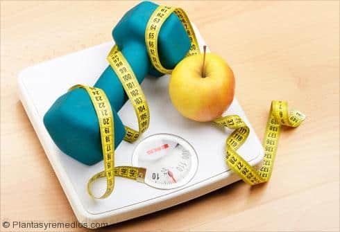Los carbohidratos y la dieta de pérdida de peso