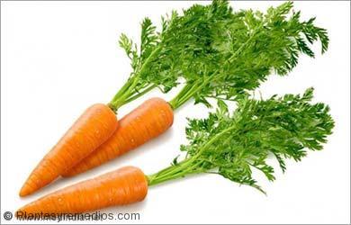 Remedios caseros para los parásitos intestinales: Zanahorias