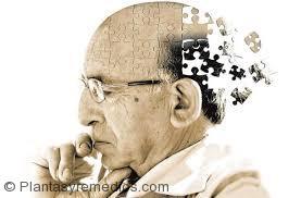 Remedios caseros para la memoria débil