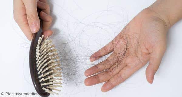 Remolacha para el tratamiento de la pérdida del cabello