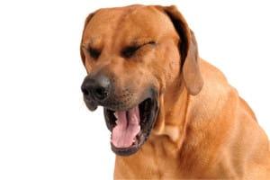 Remedios tos perreras