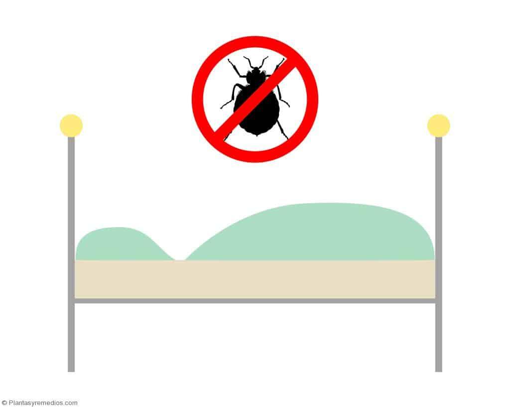 Remedios caseros para eliminar las pulgas plantas - Como eliminar las pulgas de casa remedio casero ...