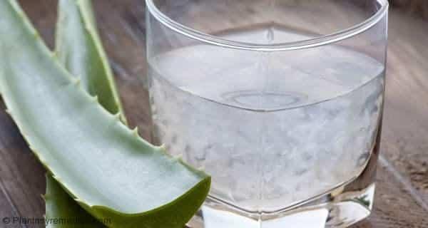 Aloe vera remedio casero para la acidez y las úlceras estomacales