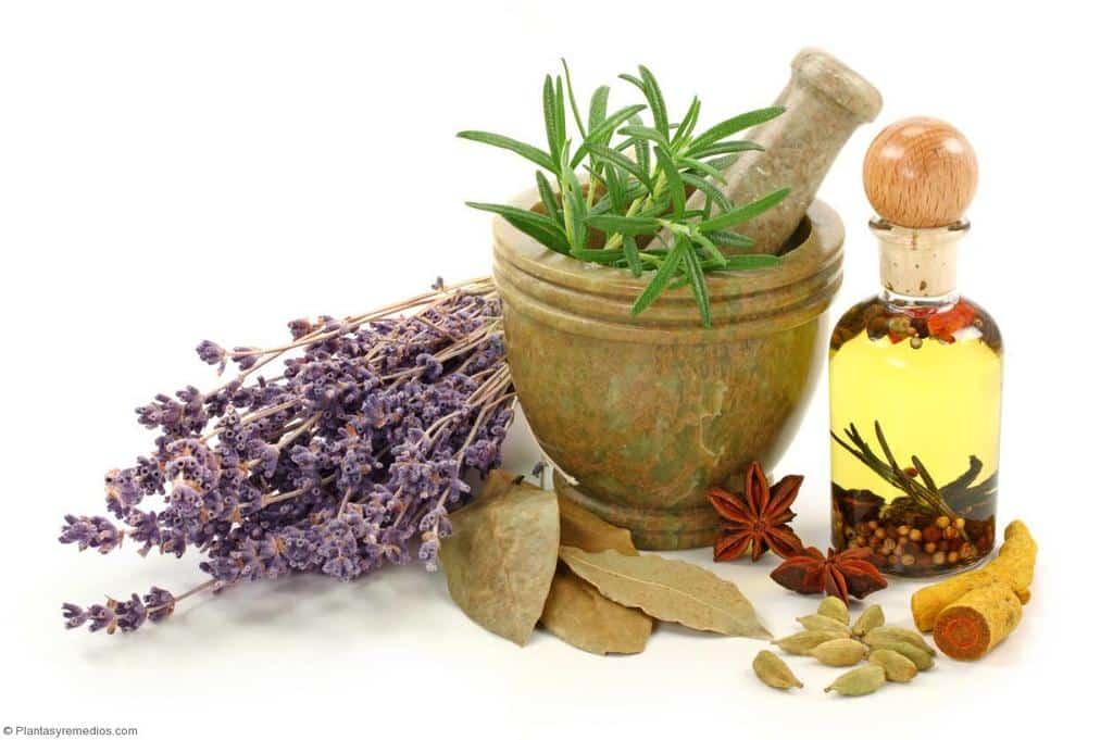 Plantas medicinales que sirven como purgante plantas for Mezclas de plantas medicinales