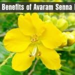 Beneficios para la salud de flor de avaram senna
