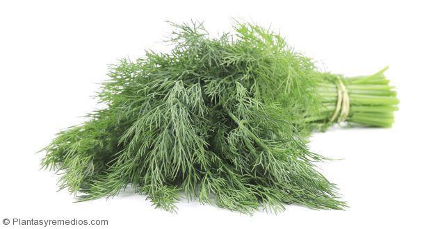 Comer hojas y semillas de eneldo para la diabetes