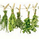 Top 8 hierbas medicinales que debe incluir en su dieta