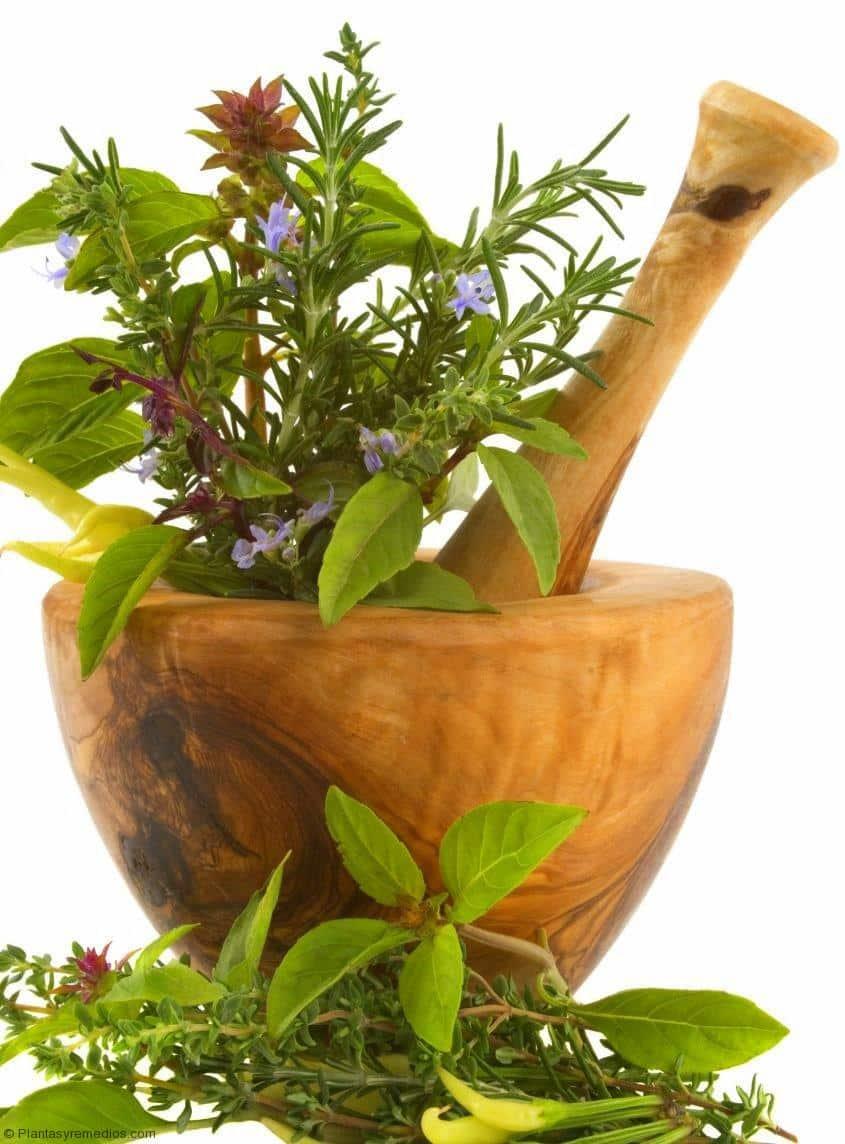 Que son las plantas medicinales plantas medicinales remedios caseros medicina natural - Cuales son las plantas con flores ...