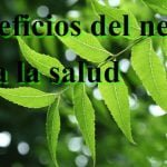El neem y sus beneficios para la salud