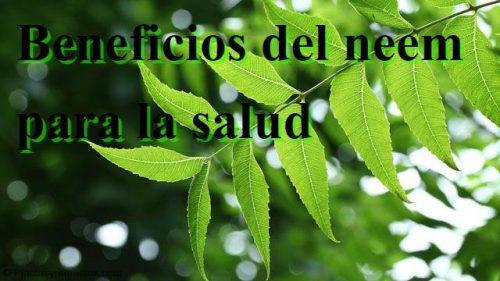 El arbol de neem sirve para bajar de peso