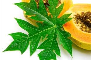 Tratar el dengue con extracto de hojas de papaya