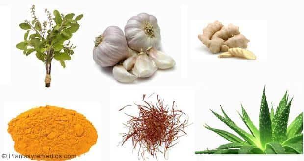 Se puede curar el cáncer con plantas medicinales