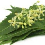 6 beneficios del neem para la piel y el cabello