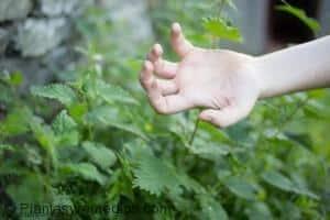 remedios con plantas para tratar la picadura de mosquito
