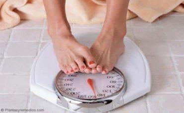 Raíz de diente de león para bajar de peso
