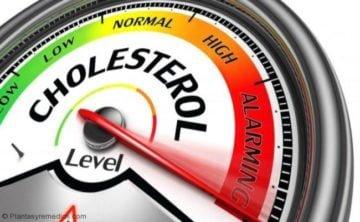 Reducir el colesterol con raíz de diente de leon
