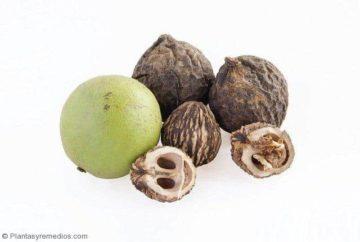 Nogal negro (Juglans nigra) para desintoxicar el cuerpo