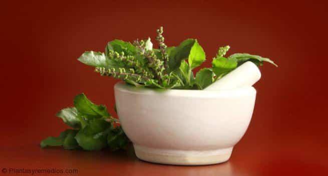 plantas naturales para eliminar la gota acido urico alimentos malos acido urico en mujeres sintomas
