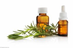 Aceites esenciales de de brote de clavo y aceite de vetiver para eliminar las termitas
