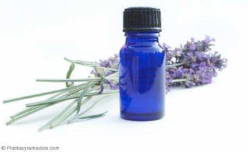 Usar Aceite de lavanda para eliminar el mal olor del cabello