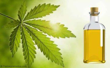 Eliminar el mal olor del cabello con aceite de neem