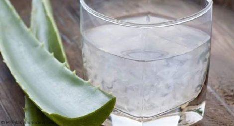 Cómo Usar Aloe Vera Para Las úlceras Bucales O Aftas Plantas