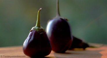 Berenjena con cascara es rica en nasunin