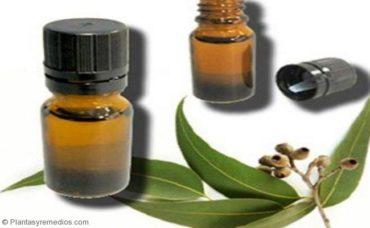 Aceite de eucalipto para el asma