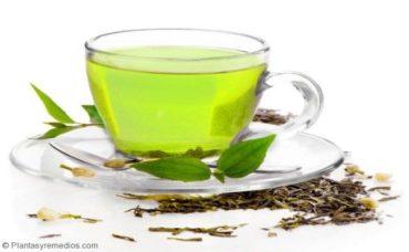Consumir Té verde para subir las defensas del cuepo