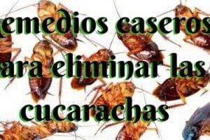 Remedios caseros para eliminar las cucarachas