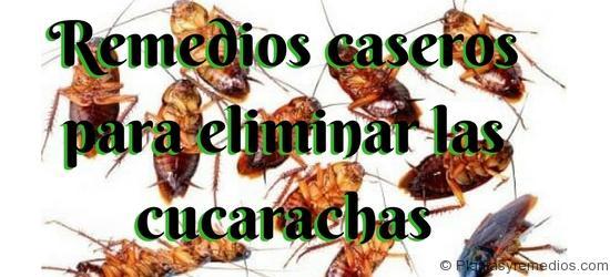 Remedios caseros para eliminar las cucarachas plantas - Remedios para eliminar cucarachas ...