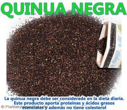 Beneficios de la Quinua Negra -Plantas Medicinales