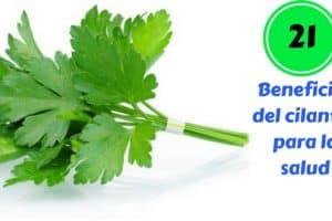 Beneficios del cilantro para la salud