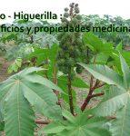 Ricino – Higuerilla : usos y propiedades medicinales
