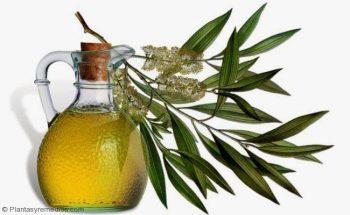 Curar la vaginosis bacteriana con aceite del árbol del té