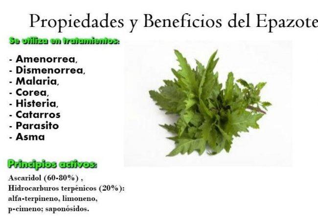 Epazote y sus propiedades medicinales plantas medicinales for Combinaciones y dosis en la preparacion de la medicina natural